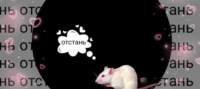 Беседа «тридевятое царство крыс»
